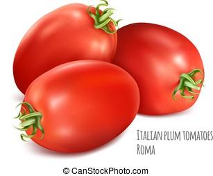 Italian plum tomatoes Roma. Vector illustration of tomato...