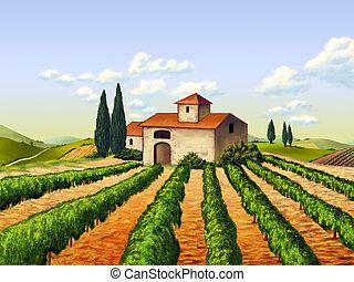 Italian vineyard - Vineyard in Tuscany, Italy. Original...
