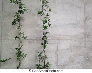 Italian vitage stone vineyard wall