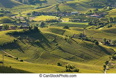 italie, collines, printemps, langhe, tôt, vignobles, vert, (...