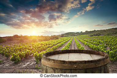 italie, toscane, vignoble, vert, baril, vin rouge
