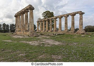 italy), chrám, basilicata., hera, (metaponto