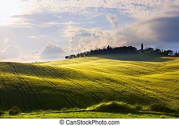 italy countryside landscape with cypress trees on the  mountain farmhouses ; sunset over the tuscany hills