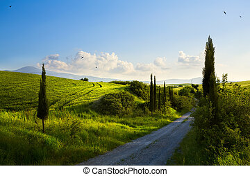 italy countryside landscape with cypress trees on the  mountain path ; sunset over the tuscany hills