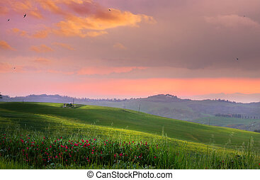 Italy; San Quirico d'Orcia; countryside landscape with red ...
