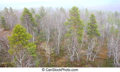 It's snowing over spring taiga 1 - Top view of taiga forest...