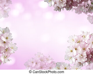 It's spring time - cherry blossoms and copy space