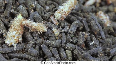 Ivan-tea with pine buds - Fermented ivan tea with pine buds...