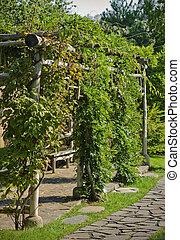 Ivied arbor in a garden