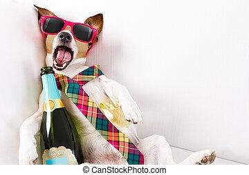 ivre, chien, gueule bois