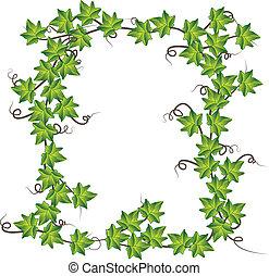 ivy., ベクトル, 緑, イラスト