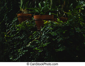 Ivy and potted plants