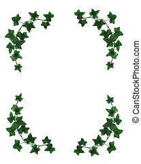 Ivy border simple