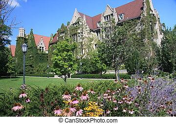 ivy-clad, 壁, の, ∥, シカゴの大学