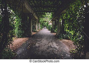 Ivy Columns Walkway in Wroclaw