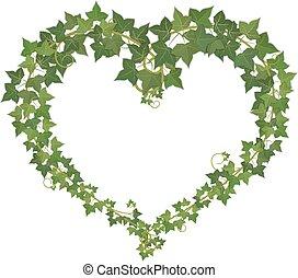 ivy., coração, símbolo, formado