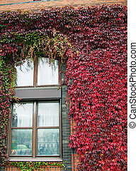 Ivy covered building 03