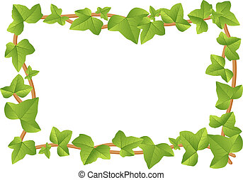 ivy frame - vector illustration of a frame from ivy vines...