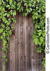 Ivy frame on wooden fance