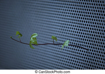 Ivy free