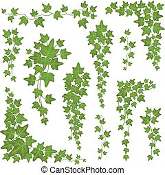 Ivy green leaves on hanging branches. Wall climbing decoration plant vector set isolated on white background