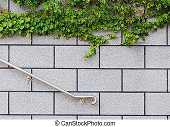Ivy green plant on brick wall