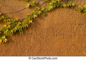 Ivy growing against a old, textured yellow wall.