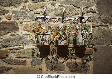 Ivy in pots on the wall