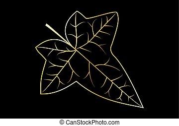 Ivy, ivy leaf,