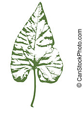 Ivy LEaf - A typical ivy leaf isolated on white