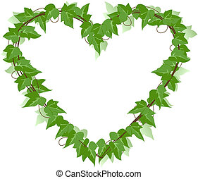 Ivy Leaf heart  - Ivy leaf heart over a white background.