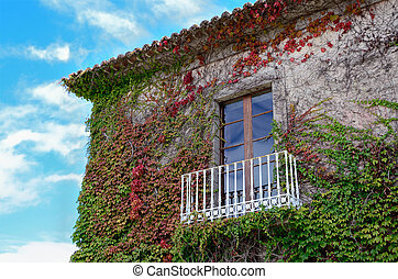 ivy leaves and balcony