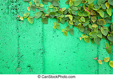 ivy leaves on green cement wall