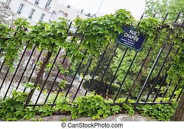 Ivy leaves on iron fence