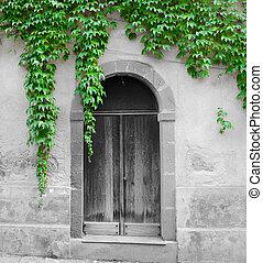 ivy leaves surrounding an old door in selective desaturation...