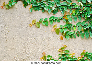 Ivy leaves the island on a brick wall background.