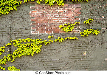 ivy on an old brick wall