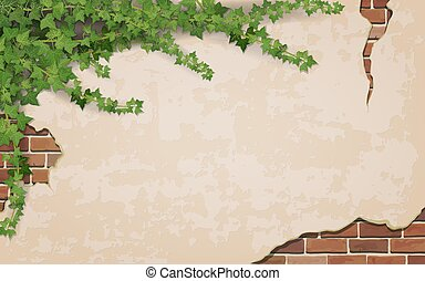 Ivy on weathered wall background