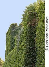 overgrown wall detail