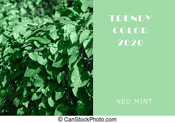 Ivy plant in Neo Mint color. Juicy tones in a new mint color. Abstract light green background with vibrant colors. Copy space layout for design