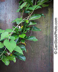 Ivy plant on empty concrete wall
