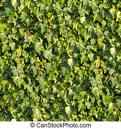 ivy., seamless, texture.
