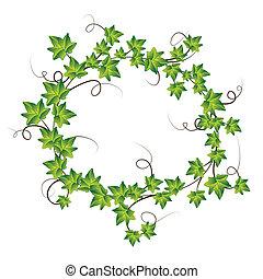 ivy., vettore, verde, illustrazione