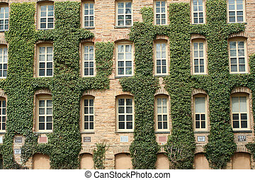 ivy wall - The ivy walls of princeton university