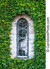 Ivy wall with house window