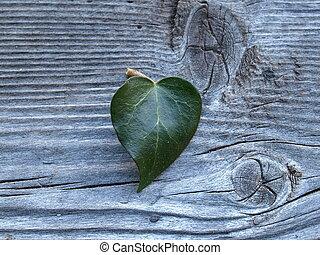 ivyleaf in heart form