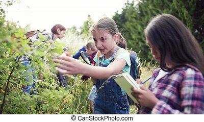 izbogis, csoport, elgáncsol, science., gyerekek, természet,...