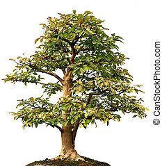 izolować, lone drzewo