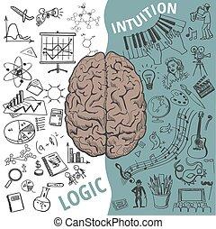 izquierda, funciones, cerebro, derecho, humano, concepto