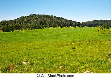 izrael, krajobraz